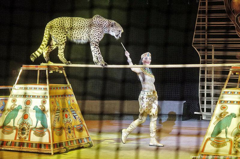 Цирк Дарьи Костюк. Вегас. 15.10.17.64..jpg