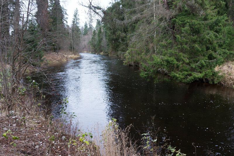 река Оредеж в Сиверский