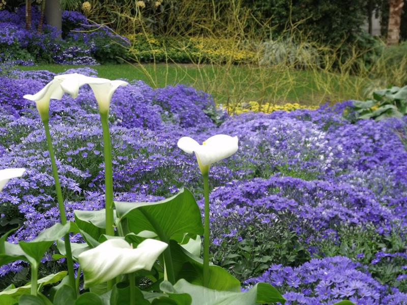 Сады Дюпона, сады Лонгвуд (Longwood Gardens)