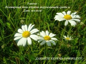 5 июня День охраны окружающей среды. Полевые ромашки открытки фото рисунки картинки поздравления