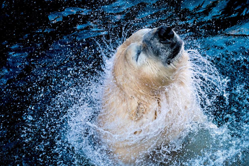 Самая ядовитая рыба в мире. Бородавчатки могут удерживать воду в жабрах и находится в течение д