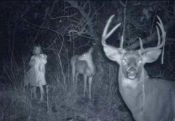Жуткие кадры с охотничьих камер ночного видения