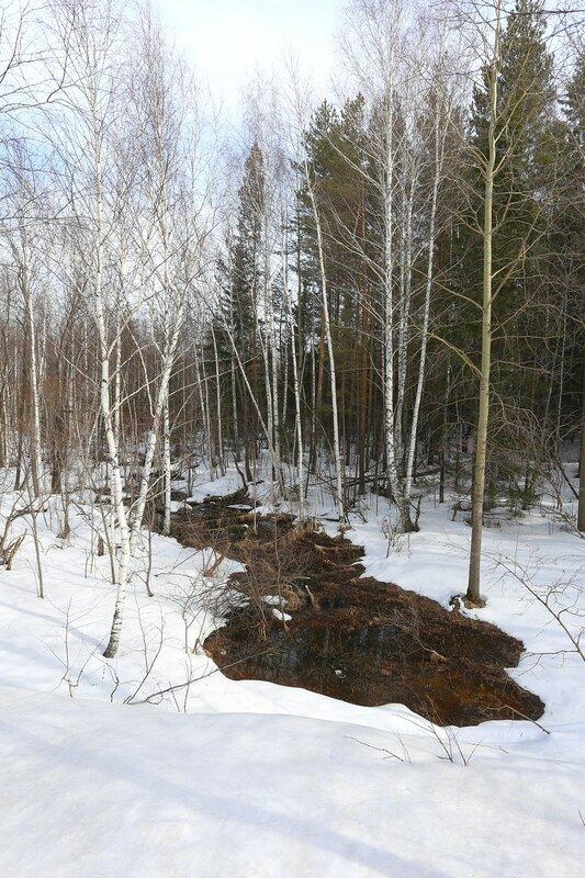 Весна на Урале. Лес