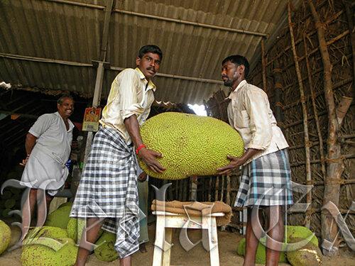 �������� ������� ����� fruits - jackfruit