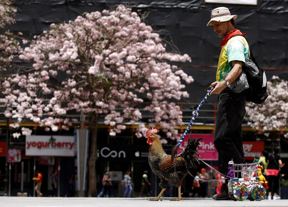3. Шли мимо уличного музыканта. Остановились, послушали. (Фото Juan Carlos Ulate | Reuters):