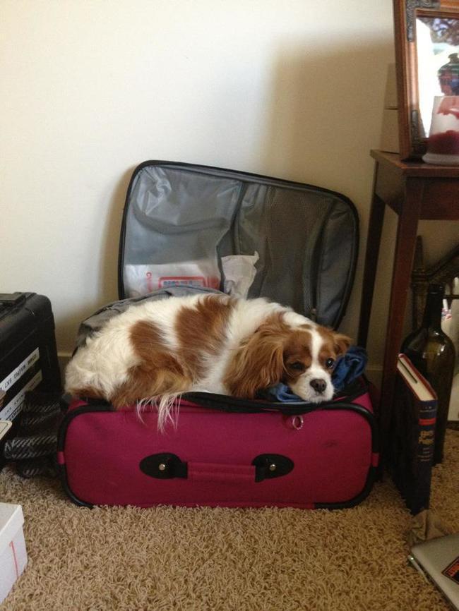 И куда это ты без меня собрался: домашние питомцы, которые не пускают своих хозяев в отпуск