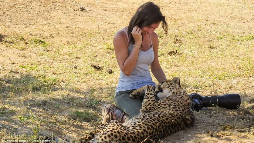 Большинство людей предпочитает разглядывать диких животных из окна джипа во время сафари, но Шеннон