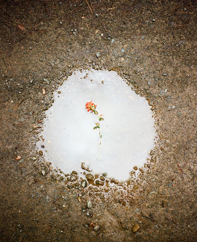 Хайме Бечум (Jaime Beechum) — фотограф из Сан-Франциско, которая обожает снимать природу и зелень. Е