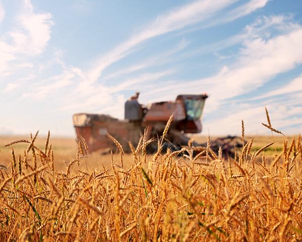 Украина отправила наэкспорт 19 млн тонн зерна вновом сезоне