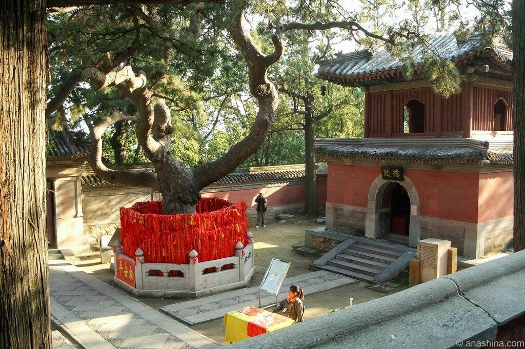 Барабанная башня и Сосна дракона, монастырь Сянцзе, Бадачу