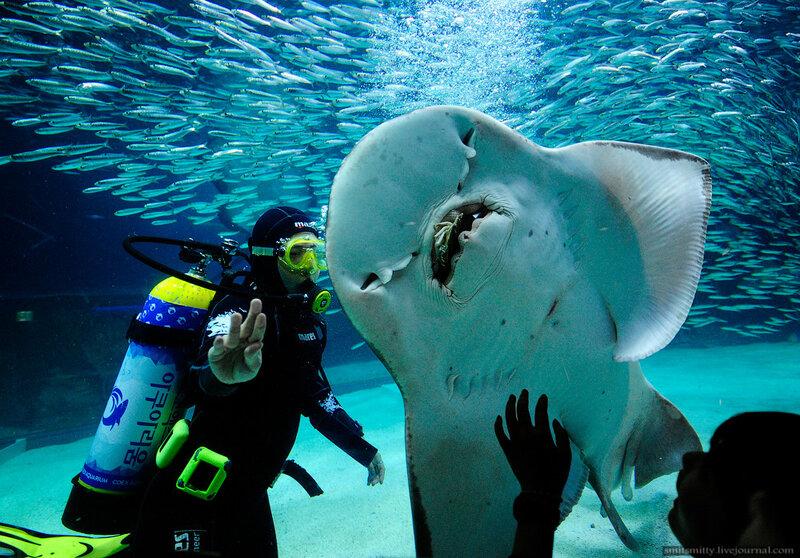 сколько получают охранник в океанариуме