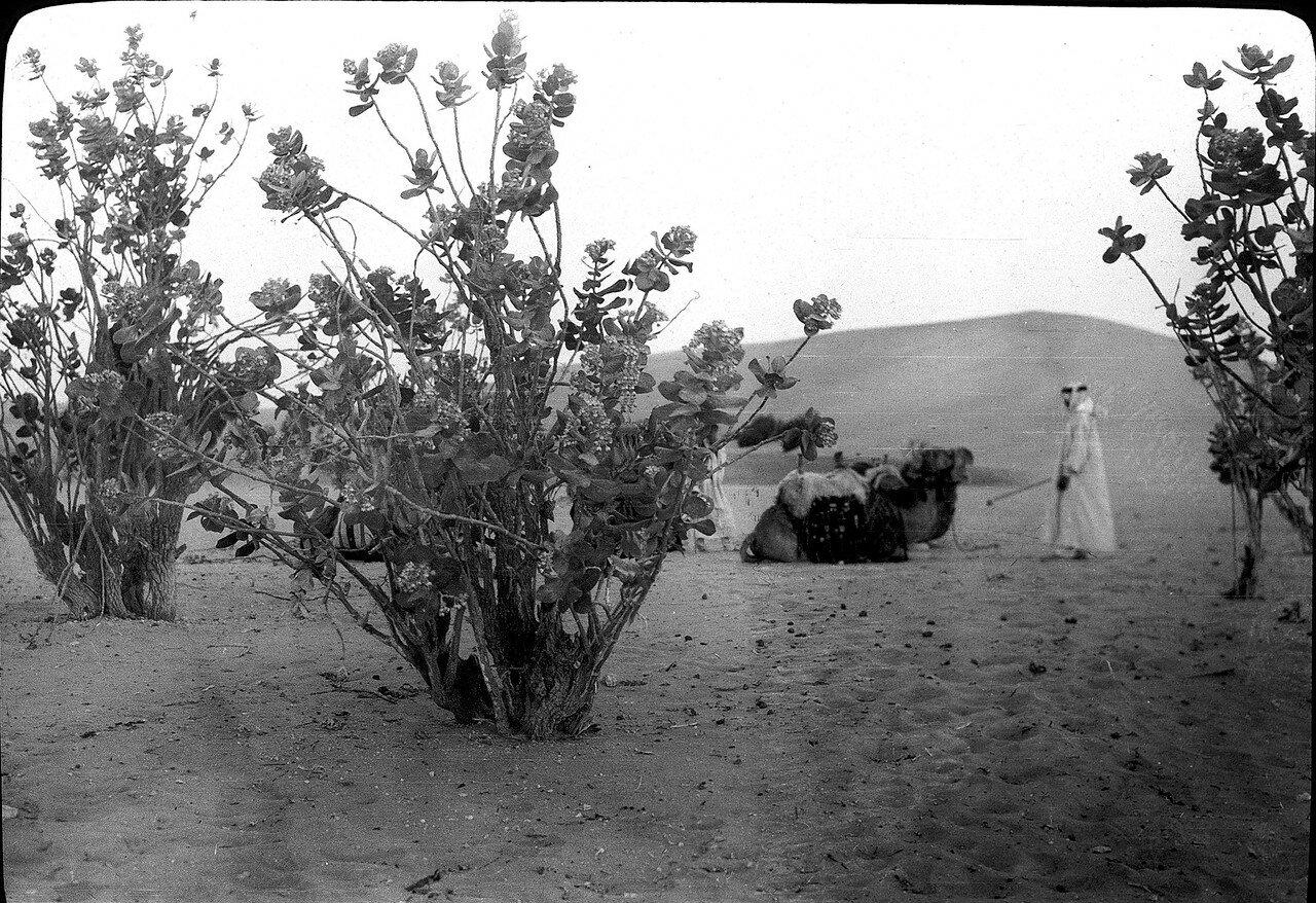Саудовская Аравия. Песчаная пустыня в Оджаре