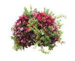 MBW-LaCenerentola-Flowers 2.png