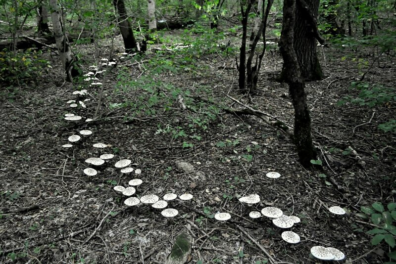 В лесу по кругу