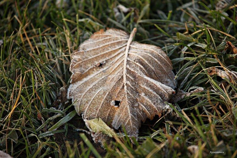 Осенний иней