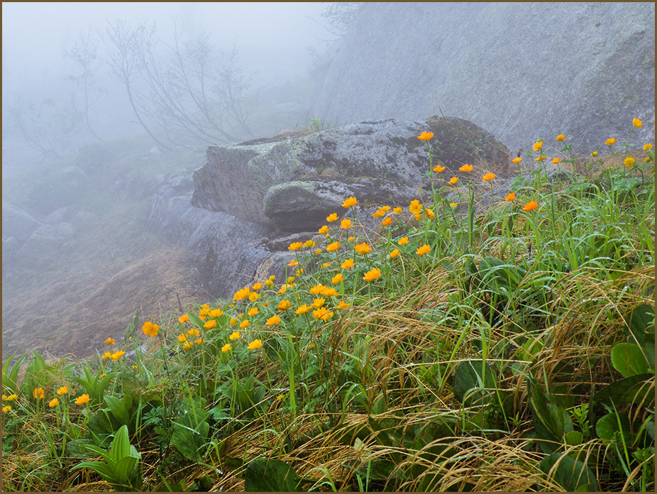 Жарки в тумане