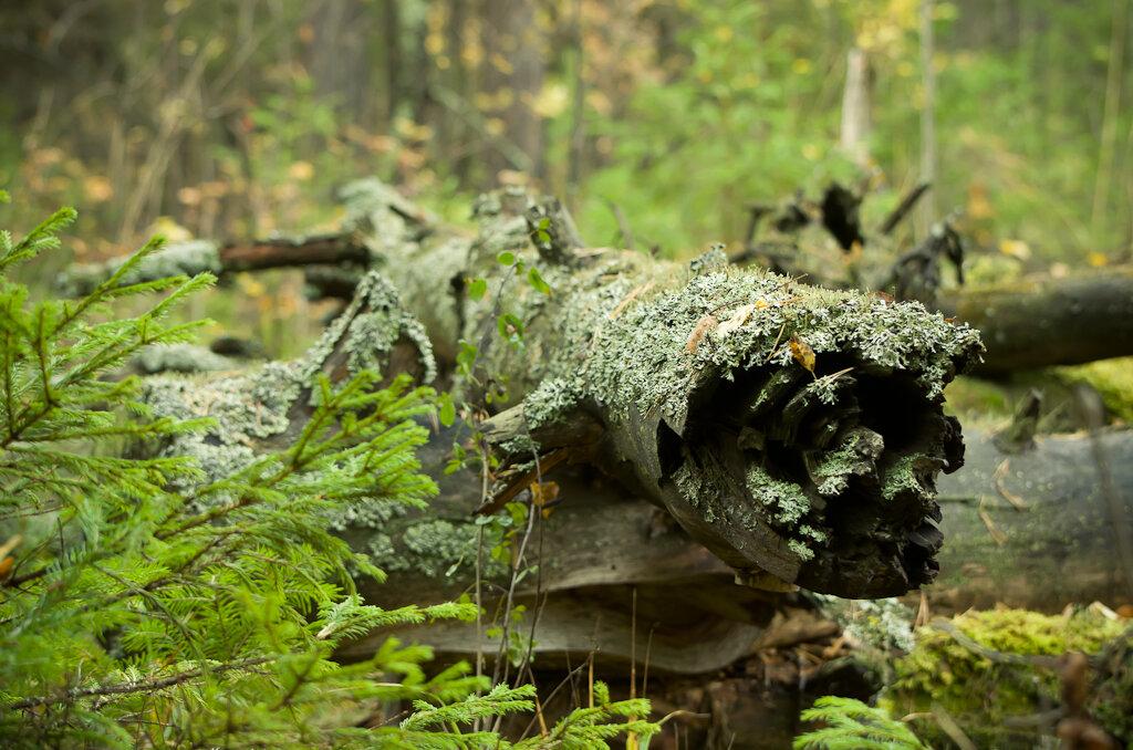 Обследовал бурелом в поисках грызунов или змей... Съемка на зеркальную камеру Nikon D5100 и телевик Nikon 70-300mm.