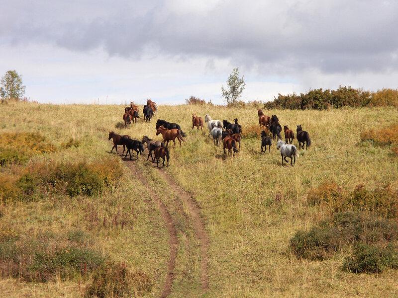 лошади, Нарымский хребет