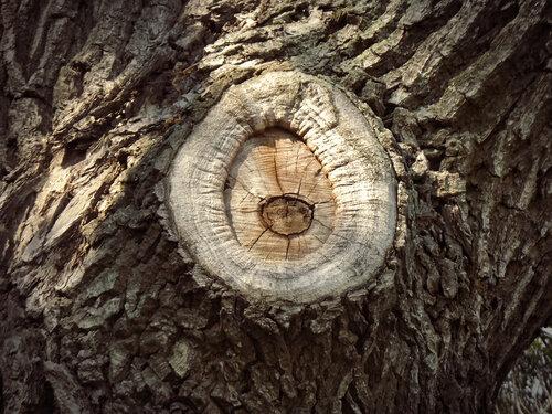 Деревьев откровенья