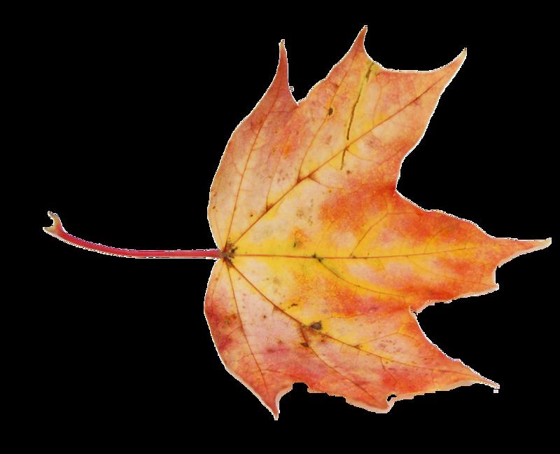 Картинки падающий осенний лист анимация
