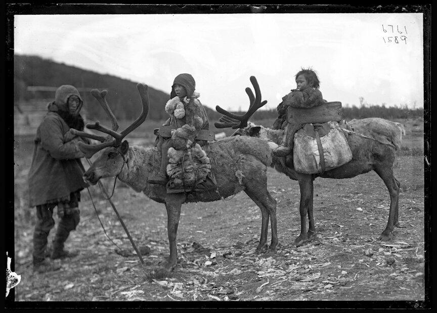 Эвенки на оленях, 1901