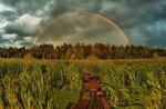 ...сквозь болото к радуге