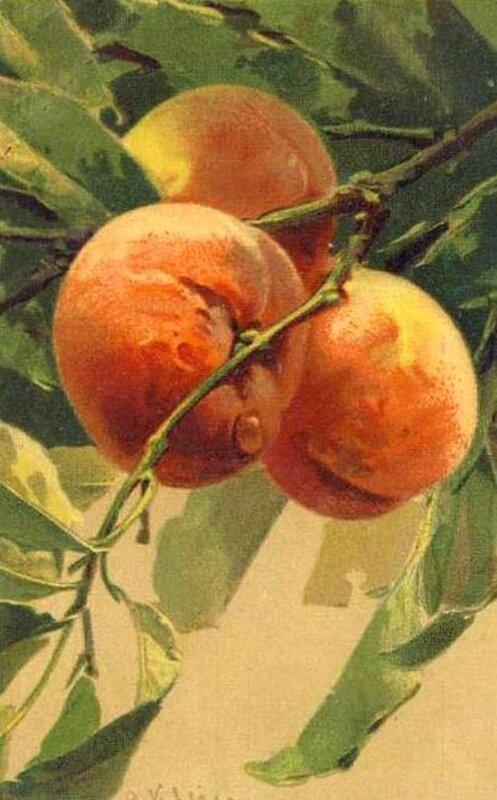 К. Кляйн. 148. Персики.