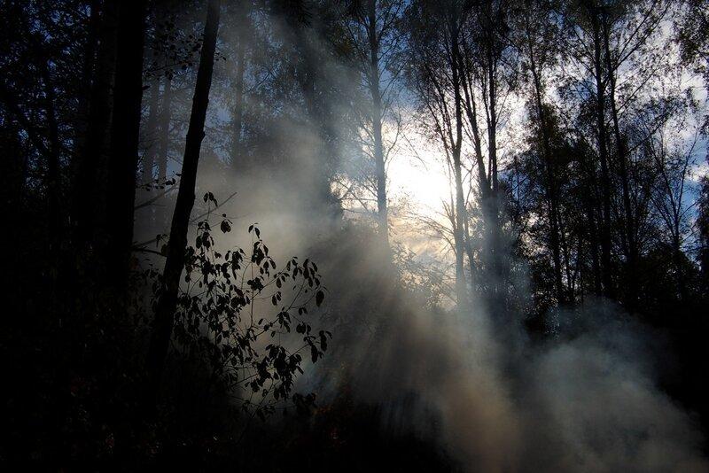 октябрьское небо в лесу