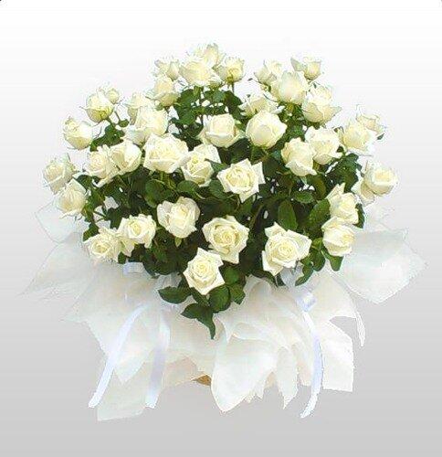 Поздравляю ! Букет белых роз открытка поздравление картинка