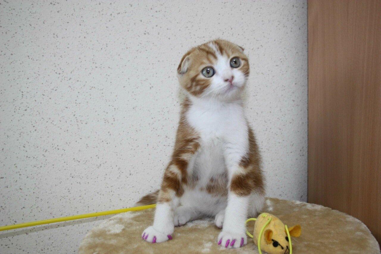 Играть хороший кот