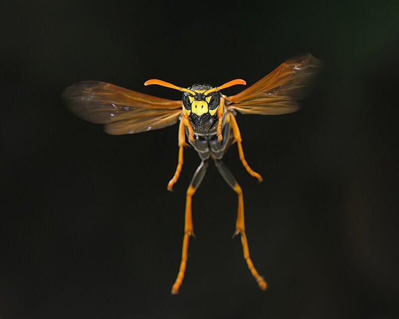 Макросъемка насекомых от польского фотографа Mikesi