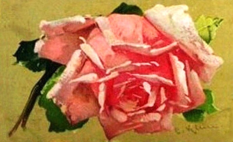 К. Кляйн. 145. Роза.