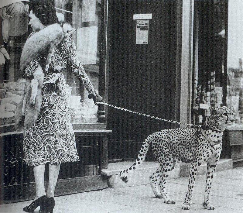 Знаменитости и животные. Phyllis Gordon