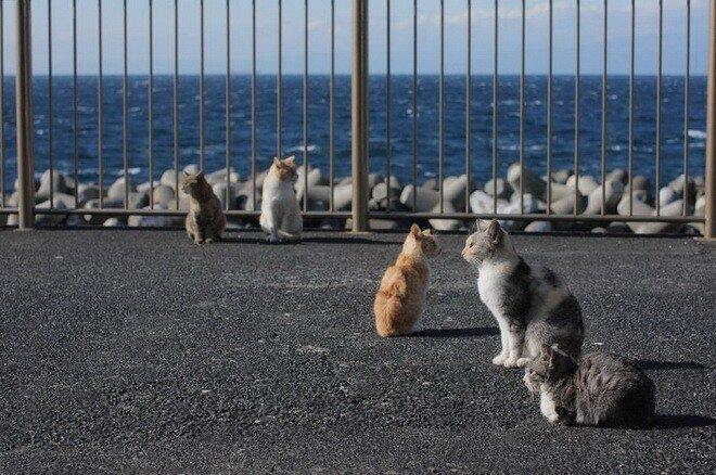 Кошки прикольные фотки