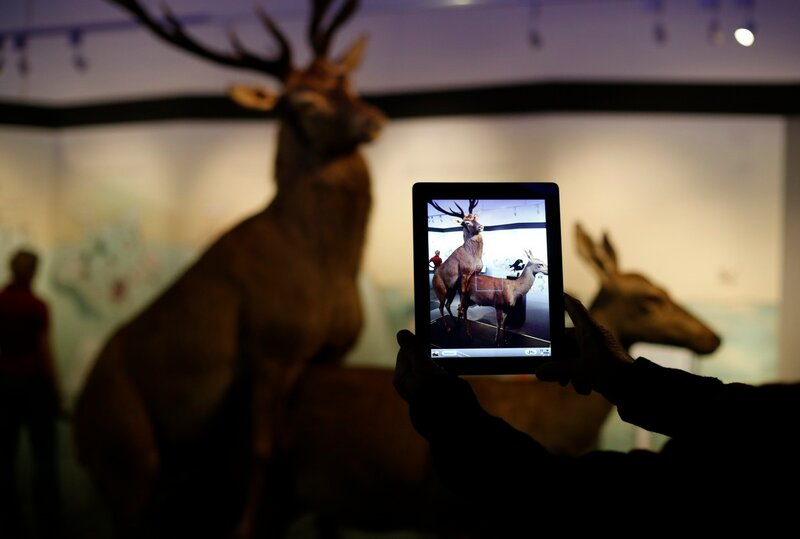 A visitor takes a picture of copulating deer at the exhibition