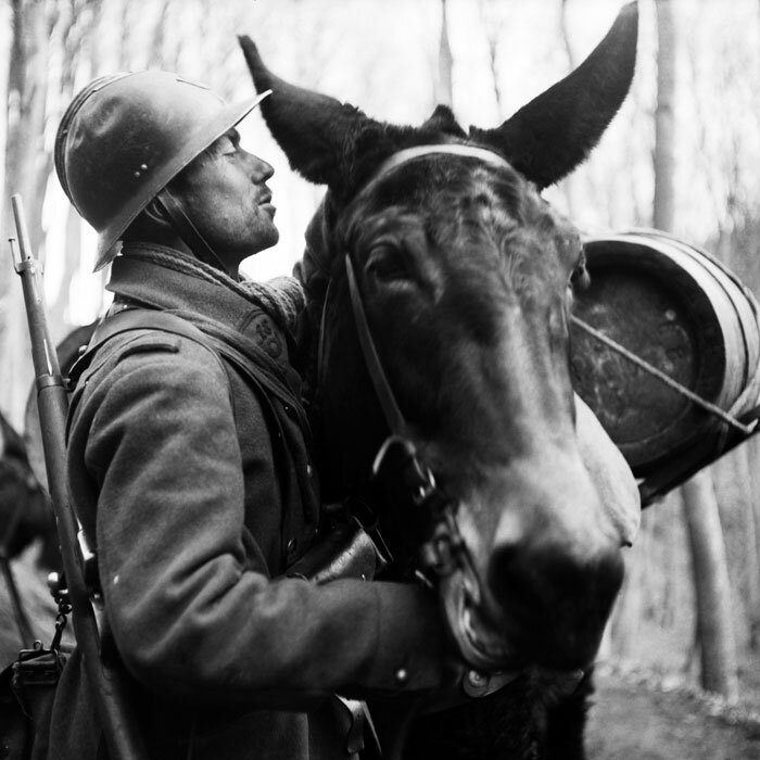 Portrait d'un chasseur de la 5e armée en compagnie de sa mule lors d'un ravitaillement. Le chasseur semble appartenir au 18e chasseurs, impossible de savoir si il s'agit d'une unité de chasseurs alpins ou à pied.