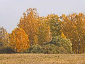 Осень золотая.