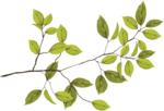 HOB_ATBB_Leaf Branch.png