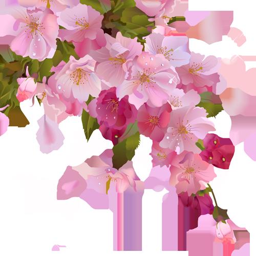 Живые цветы в png доставка цветов florego