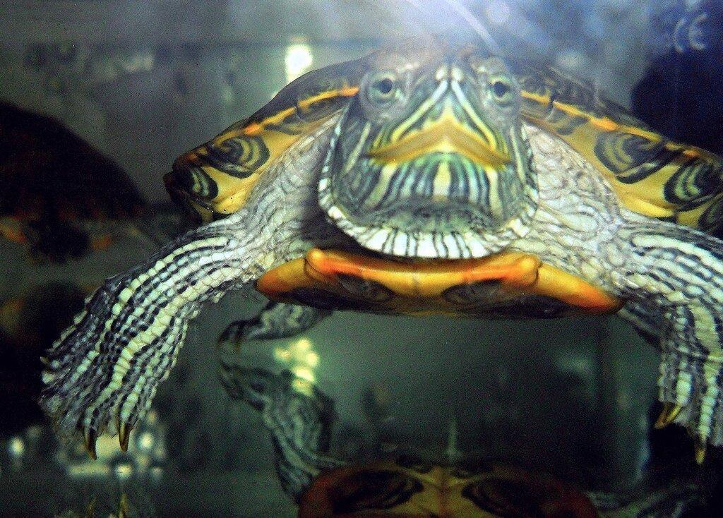 Кто в аквариуме живёт...