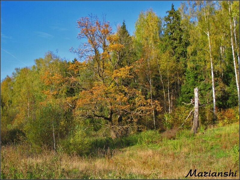 Октябрь в Подмосковье. Старое дерево