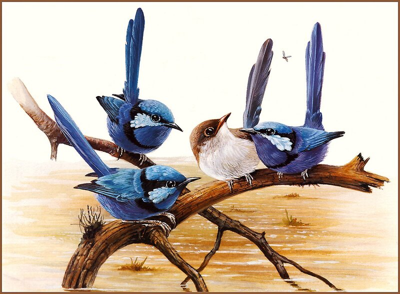 Птицы от Eric Shepherd