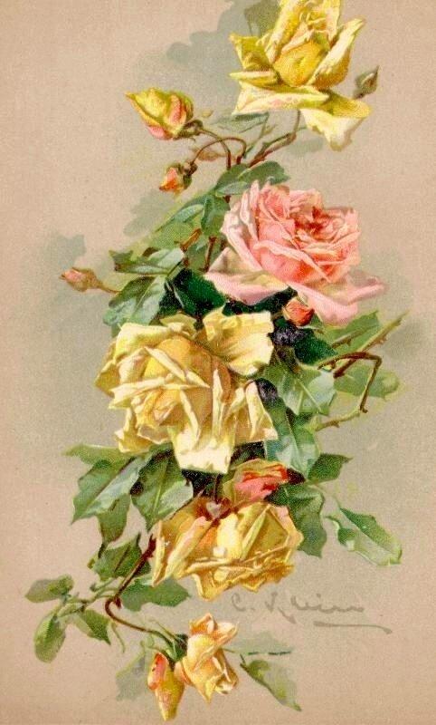 К. Кляйн. 151. Розы.