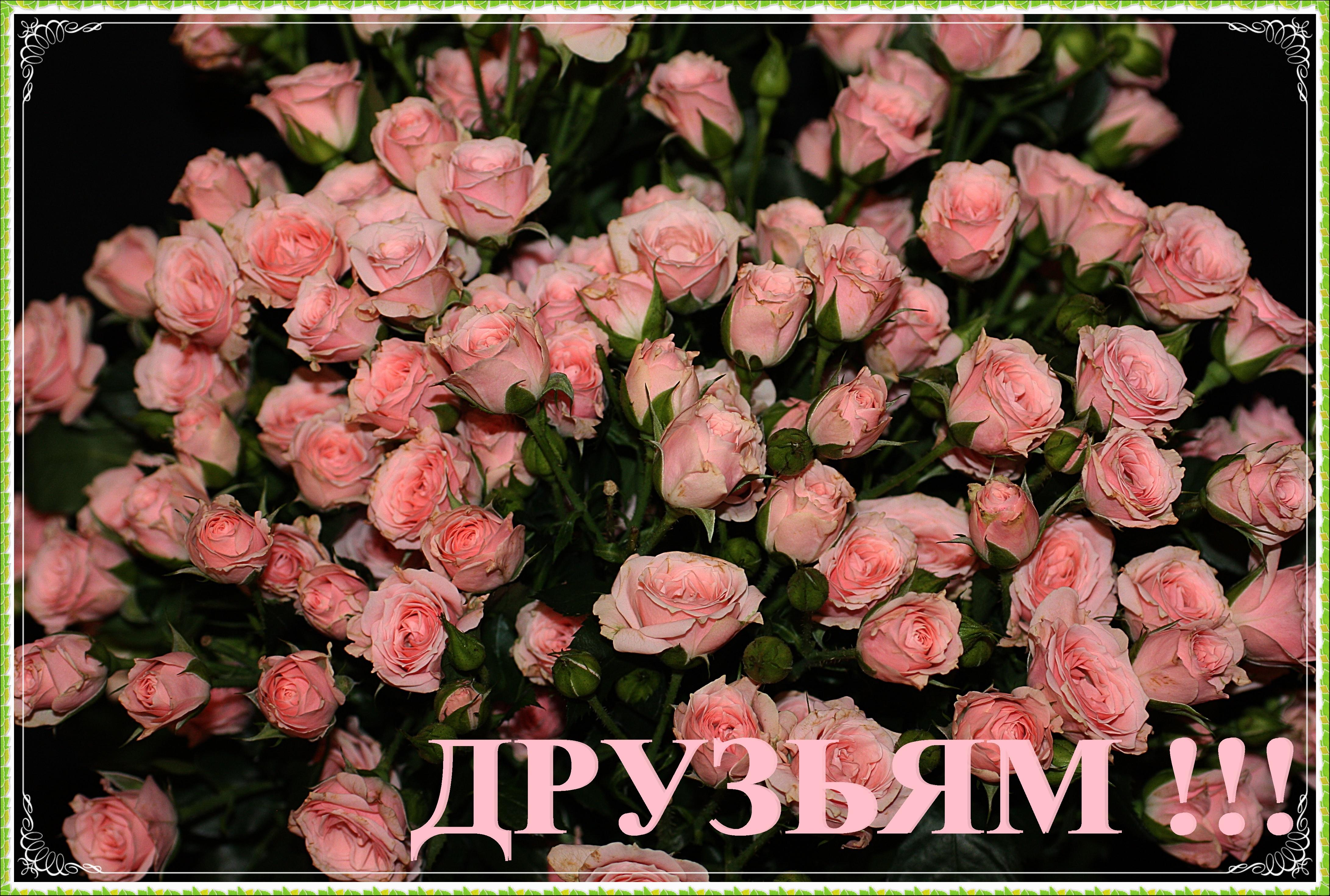 моим друзьям картинки с розами тесно