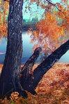 Золотая осень грибника...
