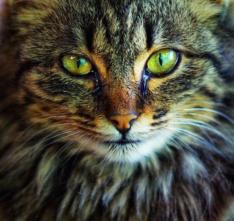 crazy eyes by yusufOrta