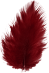 ial_hew_feather.png