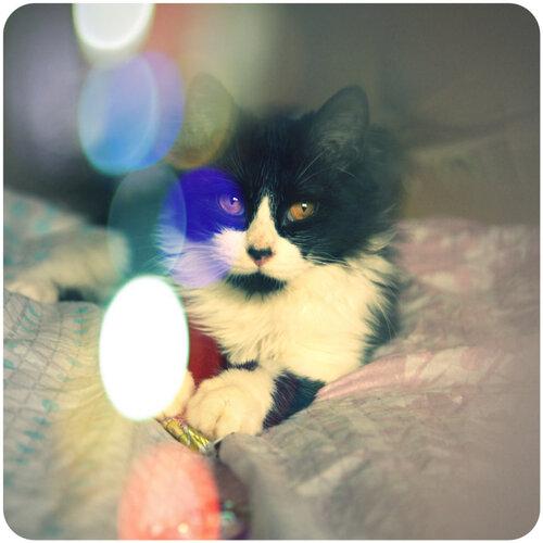 Котенок Лавроша ищет хорошую семью ! 0_c1dd5_e97b3c2e_L