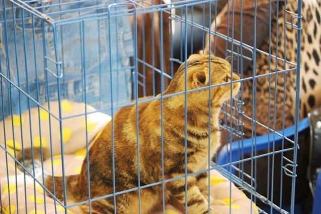 международная выставка кошек в благовещенске