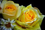Annytubes_floral_168_21_11_2011.png